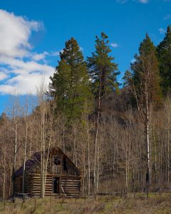 Cabin in remote woods area